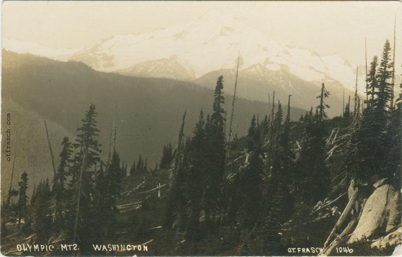 O. T. Frasch Image 1046 - Olympic Mts. Washington