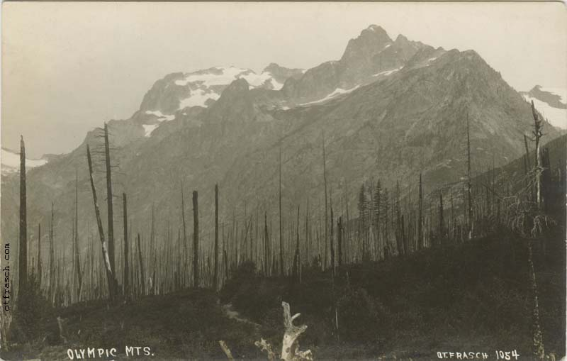 O. T. Frasch Image 1054 - Olympic Mts.