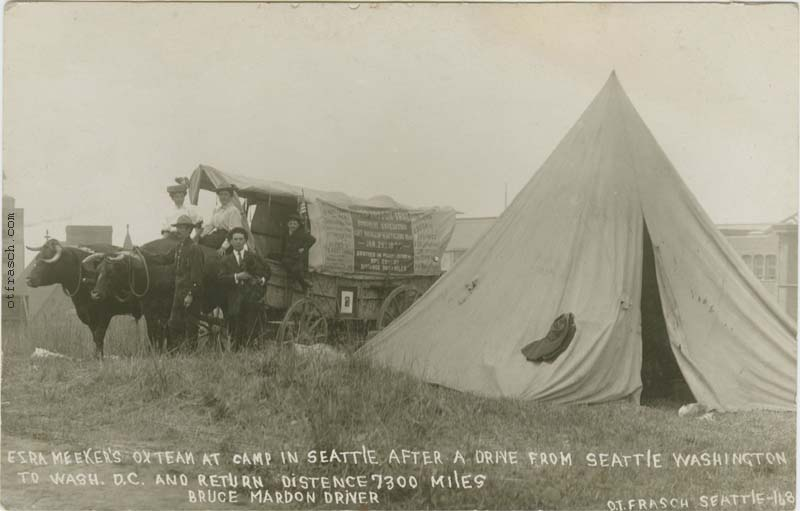 O. T. Frasch Image 168 - Ezra Meeker's Ox Team at Camp in Seattle After a Drive from Seattle Washington to Wash. D.C. and Return Distence 7300 Miles