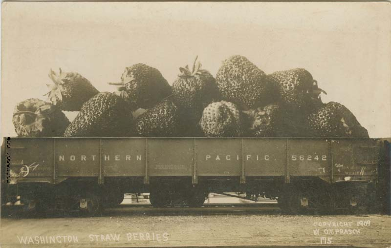 O. T. Frasch Image 175 - Washington Strawberries