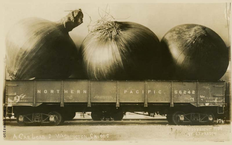 O. T. Frasch Image 176 - A Car Load of Washington Onions