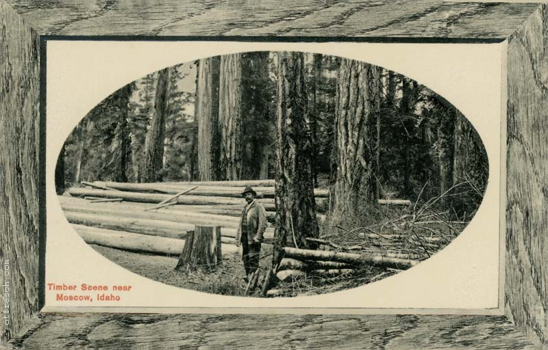 Copy A of O. T. Frasch Image 31 - Idaho Timber - Cardinell