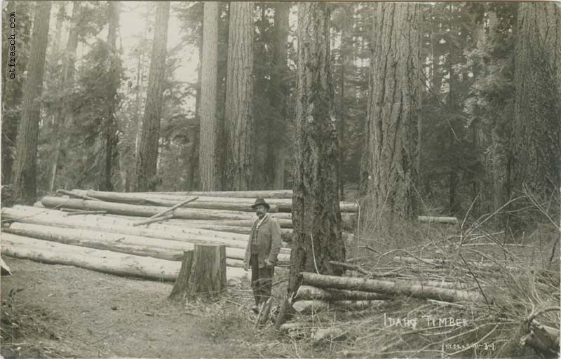 Image 31 - Idaho Timber
