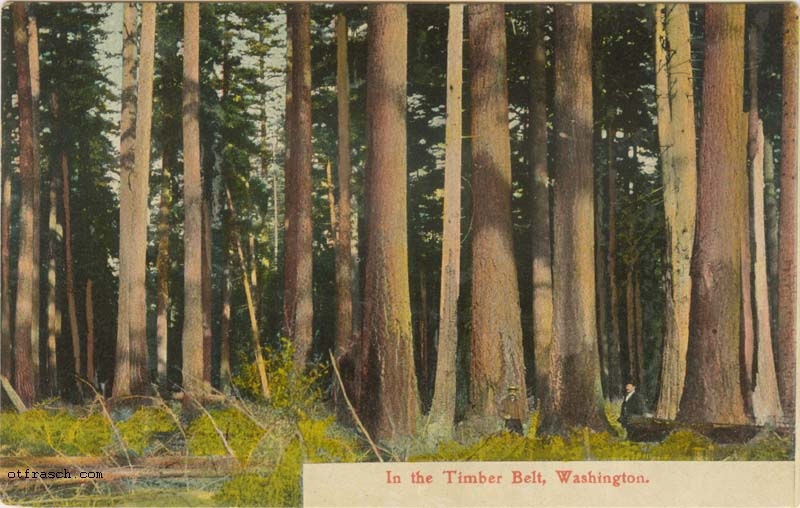 Copy A of O. T. Frasch Image 46 - In the Timber Belt, Washington