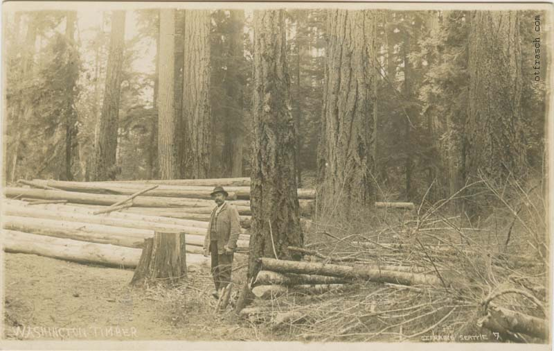O. T. Frasch Image 7 - Washington Timber
