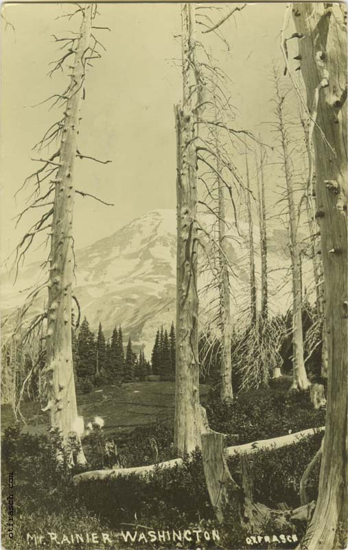 Unnumbered O. T. Frasch Image of Mt. Rainier Washington (dead trees)